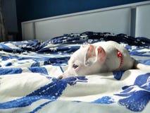 Perro de Bella Fotografía de archivo