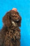 Perro de Brown Fotografía de archivo