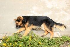 Perro de Brown en una acera Fotos de archivo