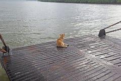 Perro de Brown en viaje del barco Imagen de archivo libre de regalías