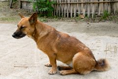 Perro de Brown que se sienta en el piso imagenes de archivo