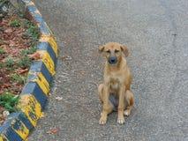 Perro de Brown que se sienta por la curva fotografía de archivo