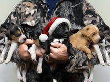 Perro de caza adorable para la Navidad Fotos de archivo libres de regalías