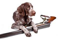 Perro de caza con un arma Fotos de archivo