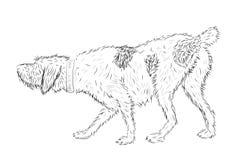 Perro de caza del vector foto de archivo libre de regalías