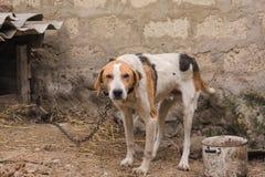 Perro de caza el vacaciones Imagen de archivo