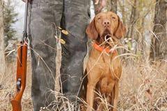 Perro de caza en el talón Imagen de archivo