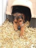 Perro de caza soñoliento en caseta de perro imagen de archivo