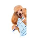 Perro de cepillado de los dientes Fotos de archivo libres de regalías