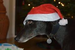 Perro de Christams Imagen de archivo libre de regalías