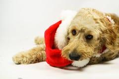 Perro de Christams Foto de archivo