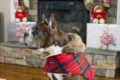 Perro de Christams Foto de archivo libre de regalías