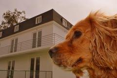 Perro de cocker spaniel con una casa Foto de archivo
