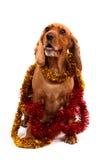 Perro de cocker spaniel del inglés y ornamento de la Navidad Foto de archivo libre de regalías