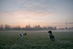 Perro de dos jóvenes en paseo de la mañana Imágenes de archivo libres de regalías