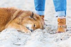 Perro de Elo que miente en la arena de una playa al lado de una mujer Foto de archivo