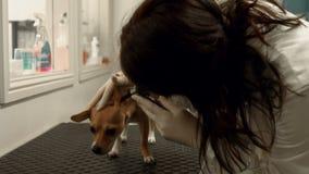 Perro de examen del veterinario en su oficina