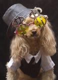Perro de Gamblin Foto de archivo