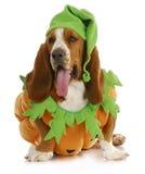 Perro de Halloween Fotos de archivo libres de regalías