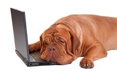 Perro de Hardworker con el ordenador imagen de archivo libre de regalías
