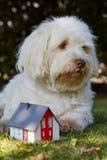 Perro de Havanese que mira simbólicamente una casa de la estatuilla Imagen de archivo