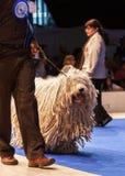 Perro de Komondor Imagenes de archivo