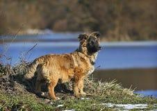 Perro de la amapola al aire libre Imagen de archivo