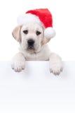 Perro de la bandera de la Navidad Foto de archivo