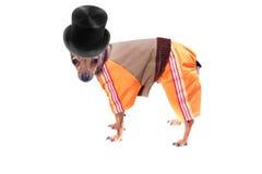 Perro de la buena familia en alineada estacional divertida Imagen de archivo libre de regalías