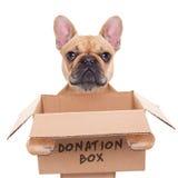 Perro de la caja de la donación Fotografía de archivo
