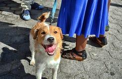 Perro de la calle Fotografía de archivo