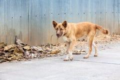 Perro de la calle Foto de archivo libre de regalías