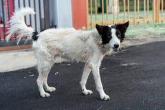 Perro de la calle imagenes de archivo