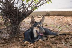 Perro de la calle Foto de archivo