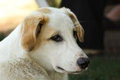 Perro de la calle Fotos de archivo