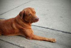 Perro de la calle al lado del camino Imágenes de archivo libres de regalías