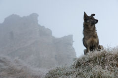 Perro de la calle cerca de la fortaleza Foto de archivo