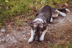 Perro de la calle en el bosque imagenes de archivo