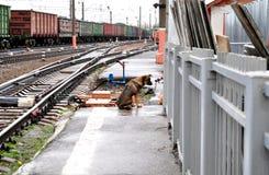 Perro de la calle en la estación de tren Imagen de archivo