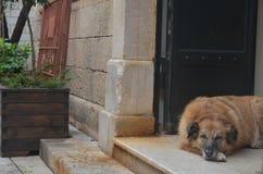 Perro de la calle en los pasos de una casa con la puerta del metal Fotos de archivo libres de regalías
