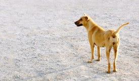 Perro de la calle en Tailandia Imágenes de archivo libres de regalías