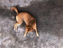 Perro de la calle, mentira sin hogar del perro en la vieja opini?n superior del camino concreto fotos de archivo