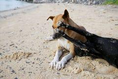 Perro de la calle que juega junto Imagen de archivo