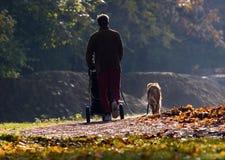 Perro de la caminata Fotos de archivo