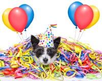 Perro de la celebración del partido Imagenes de archivo