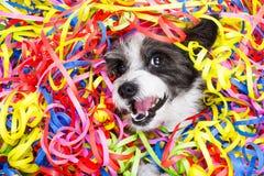 Perro de la celebración del partido Fotografía de archivo