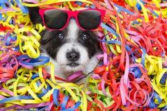 Perro de la celebración del partido Foto de archivo