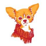 Perro de la chihuahua - ejemplo del vector Imagen de archivo libre de regalías