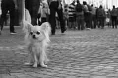 Perro de la ciudad Fotos de archivo
