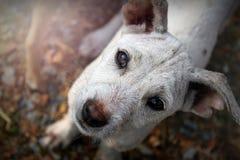 Perro de la compasión Imagenes de archivo